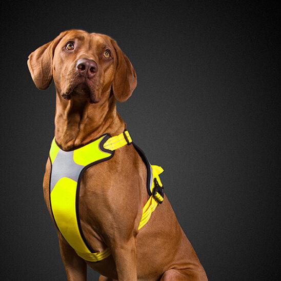 hurtta_active_harness_high_visibility_03
