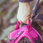 hurtta_active_harness_high_visibility_04