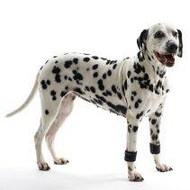 Poignet de réhabilitation pour chiens Kruuse