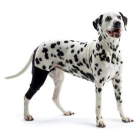 Genouillière pour chiens Kruuse