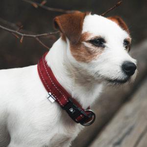 Collier coussiné tout aller pour chien Hurtta