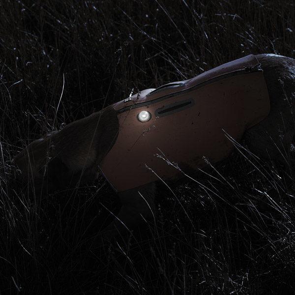 Lumière Polaire LED pour chien Hurtta
