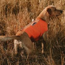 Gilet de randonnée pour chien Hurtta (Répulsif anti-insectes)