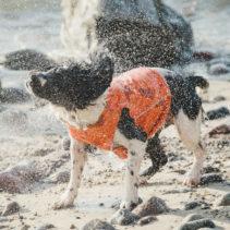 Gilet Ranger Hurtta pour chien (Répulsif anti-insectes)