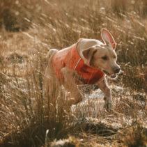 Gilet d'eau Hurtta pour chien (Répulsif anti-insectes)