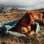 Sac de couchage pour chien ECO Hurtta